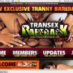 Transex Bareback Online